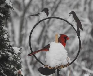 snowcard2